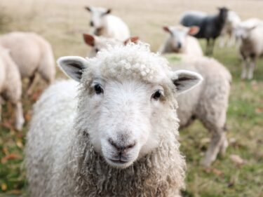 働く自由が生まれたとき【きっかけは羊!?】