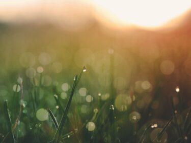 素敵な一日は朝から始まる【心が喜ぶ行動を習慣に】