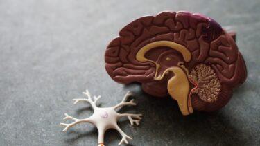 老化と運動について考える【脳を鍛えるには運動しかない】